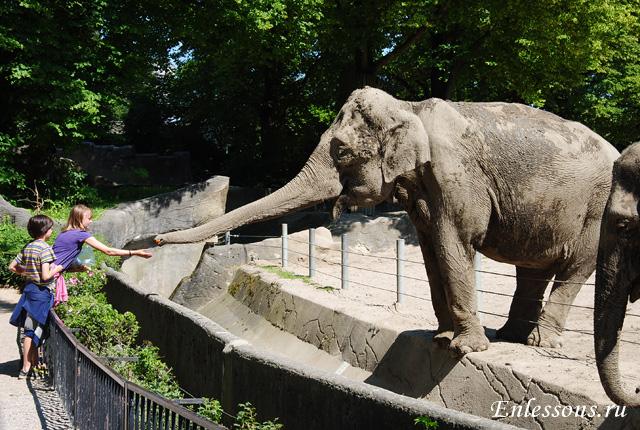 Зоопарк в Гамбурге